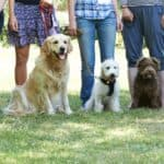 Dog Obedience Classes Phoenix Arizona