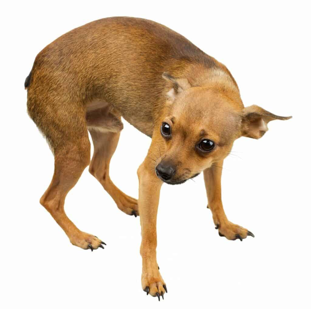 Dog Anxiety Training