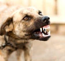 Phoenix Dog Aggression Trainers