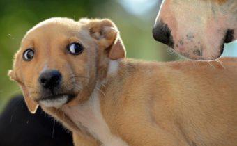Canine Body Language Dog Training