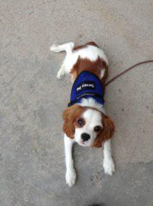 Phoenix Dog Training Service Dog Training