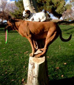 Dog Training Phoenix Balanced Dog Training