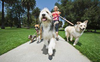 phoenix dog training top 10 mistakes dog owners make