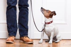 Dog Trainer Phoenix
