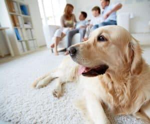 Dog Training Glendale Arizona