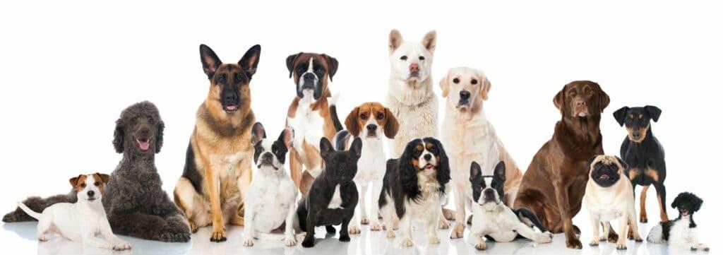 Dog Obedience Trainers in Phoenix - Scottsdale Az
