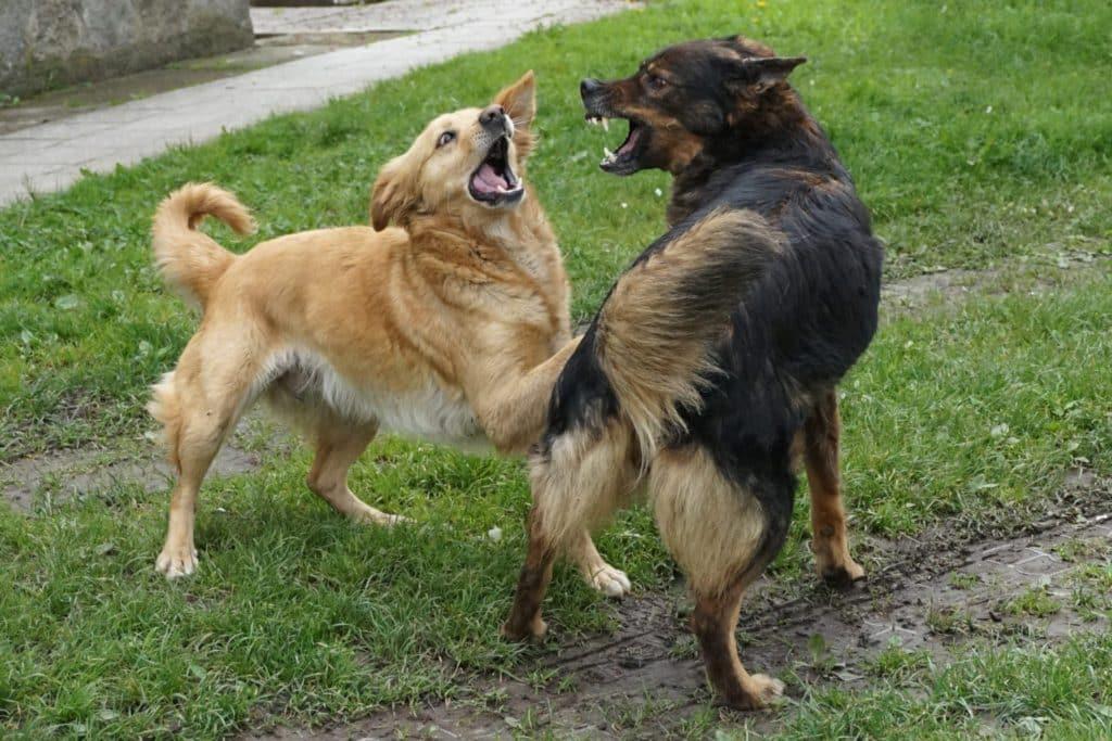 Dog Aggression Training Phoenix