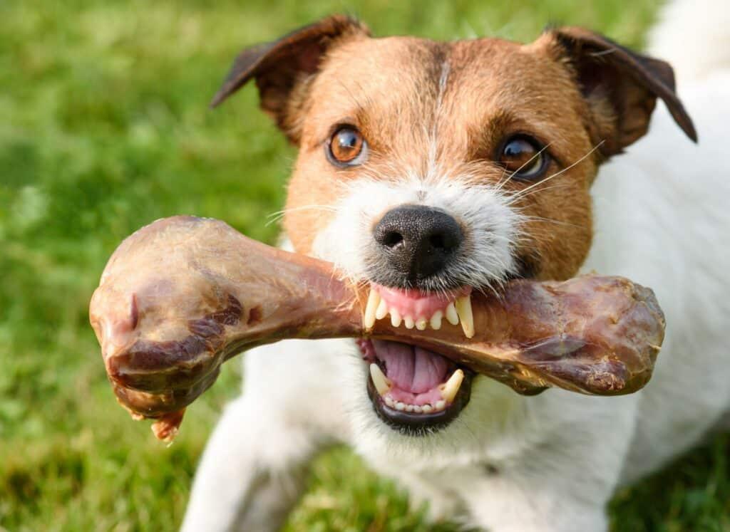 Dog Aggression Training Phoenix Food Aggression