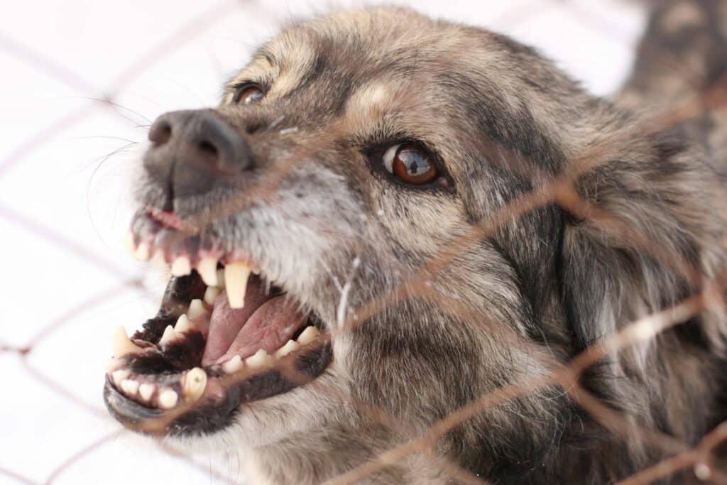 dog aggression training phoenix territorial aggression