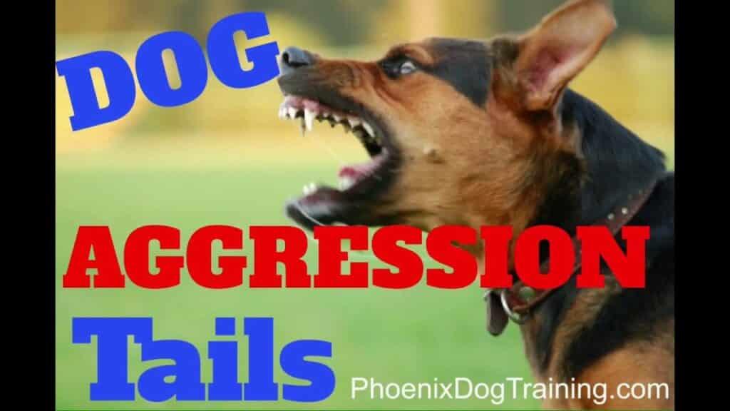 Service Dog Training Phoenix Az