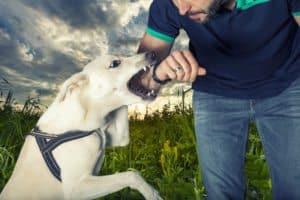 Aggressive Dog Training Avondale Arizona