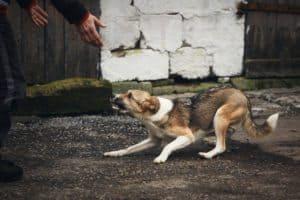 Dog Training Avondale Dog Anxiety Behavior Modification