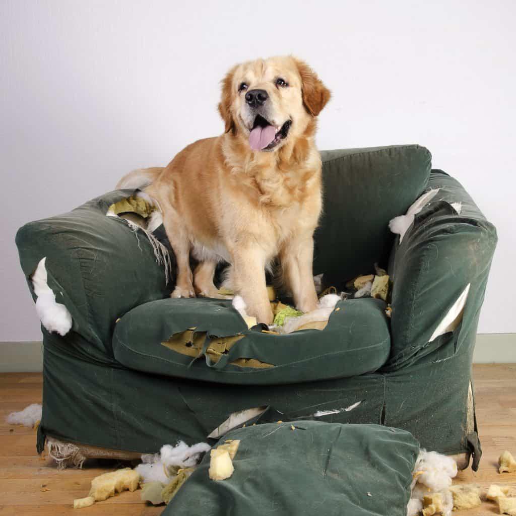 Dog Trainers Scottsdale