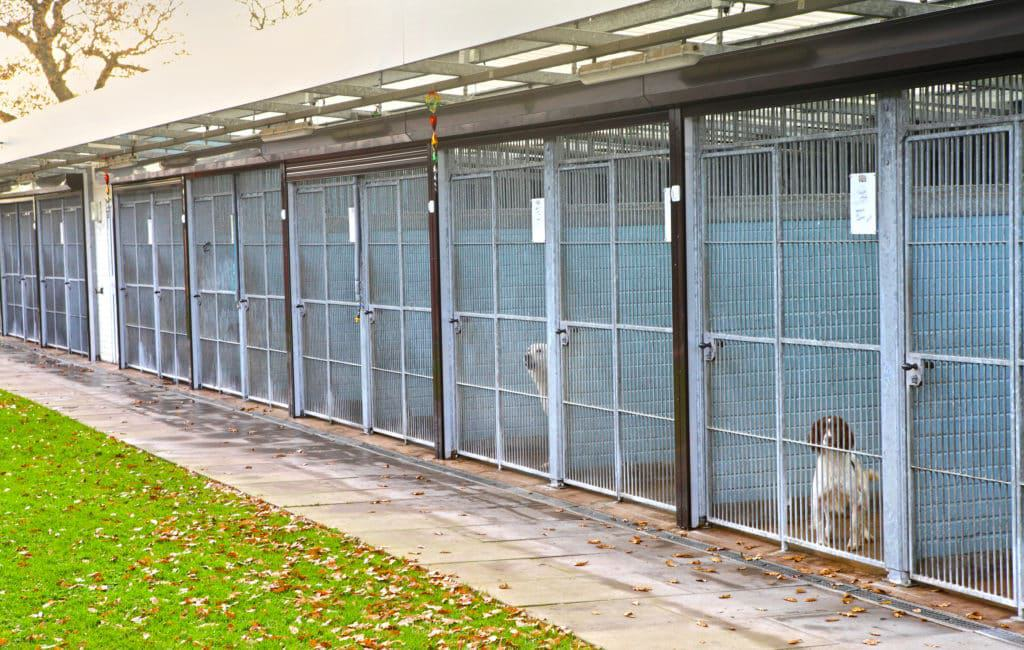 Dog Training Phoenix Dog Board and Train