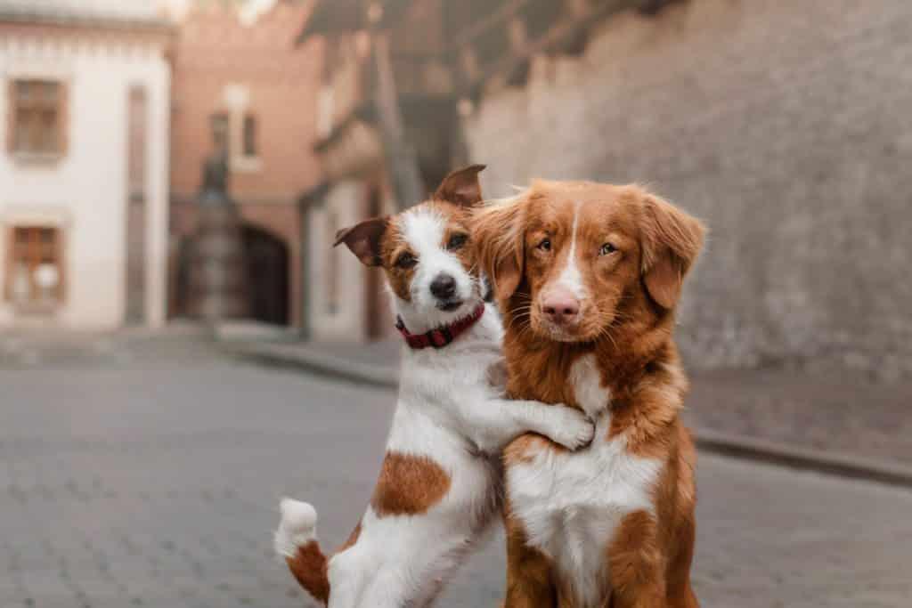 Phoenix-Dog-Training