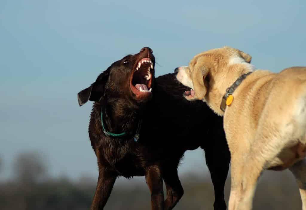 Dog Aggression Training Mesa