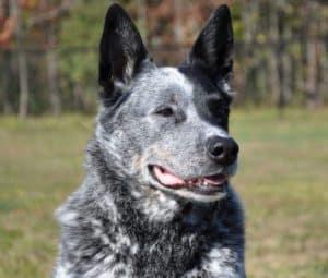Dog Training Queen Creek Az