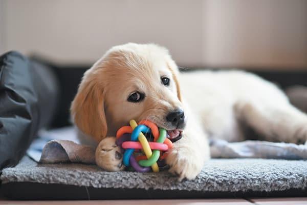Puppy Training Mesa AZ