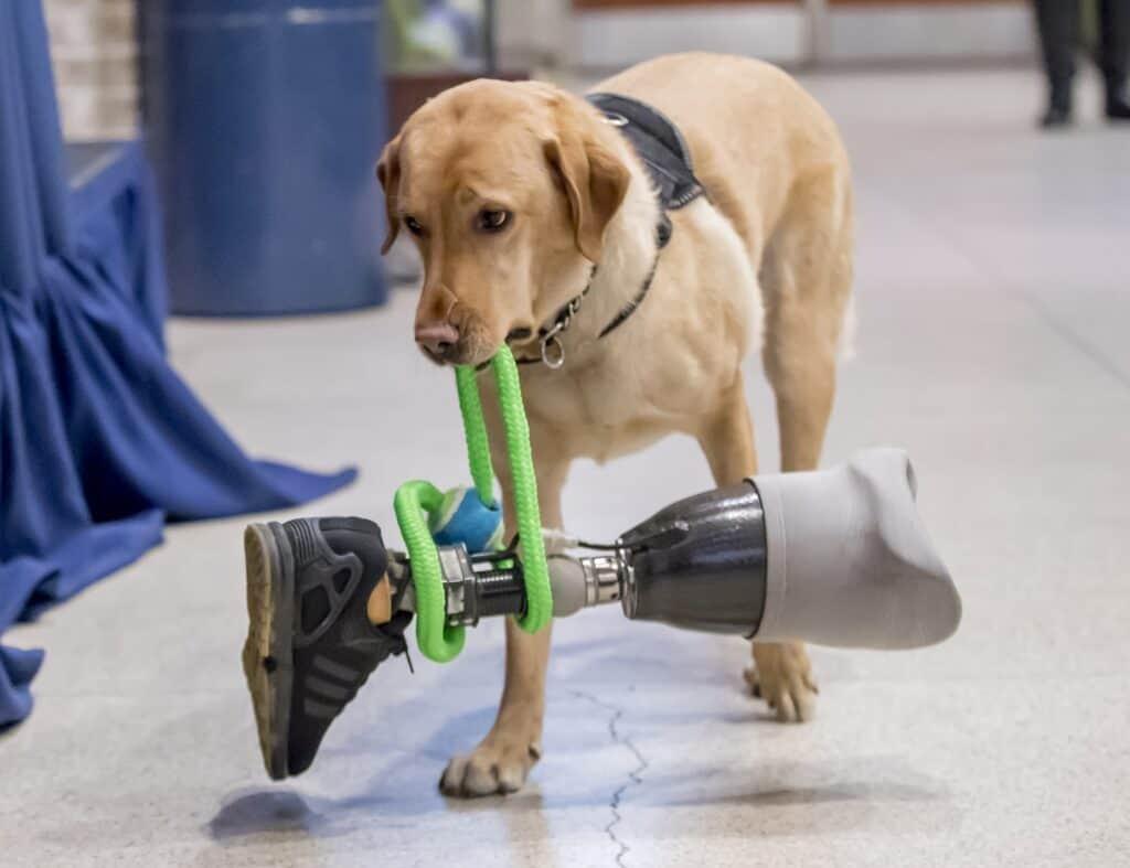 Service-Dog-Training-Az-01
