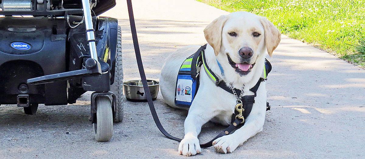 Service-Dog-Training-Az