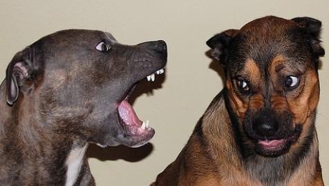 Dog Aggression Training Fountain Hills