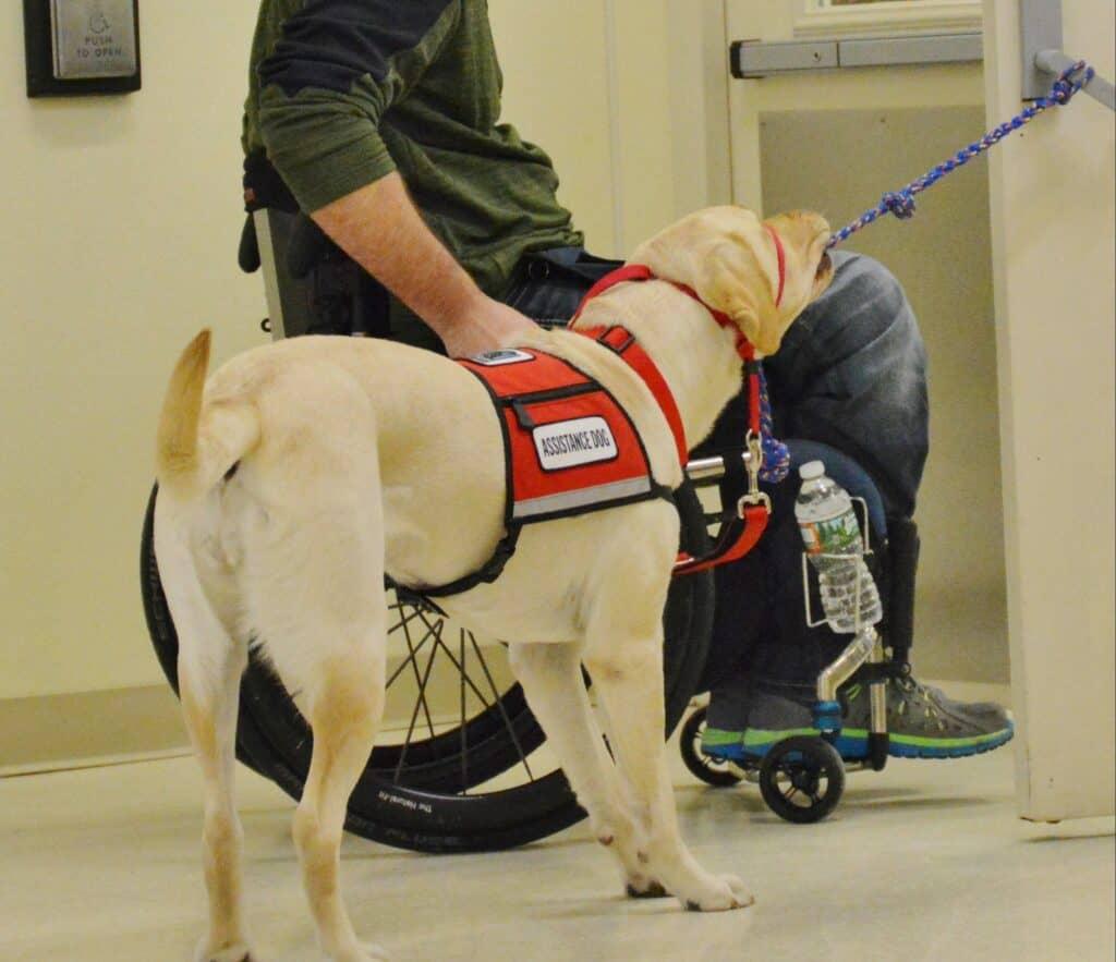 Service Dog Training Fountain Hills