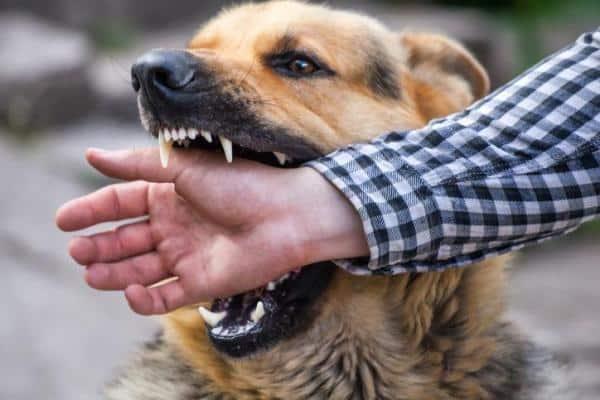 Dog Trainig Glendale Dog Aggression Trainig