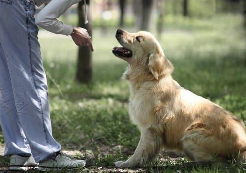 Dog Training Glendale
