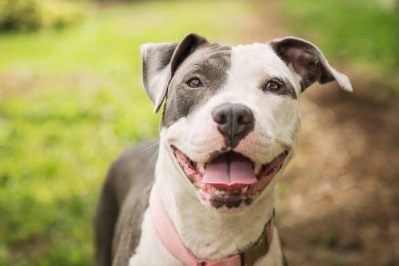 Dog Training Suprise Arizona